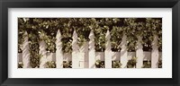 Framed White picket fence surrounded by bushes along Truman Avenue, Key West, Monroe County, Florida, USA