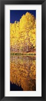 Framed Reflection of Aspen trees in a lake, Telluride, San Miguel County, Colorado, USA