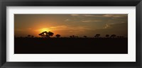 Framed Sunset over the savannah plains, Kruger National Park, South Africa
