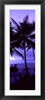 Framed Palm trees on the coast, Colombia (purple)