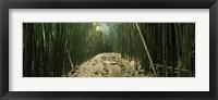 Framed Bamboo Forest, Hana Coast, Maui, Hawaii
