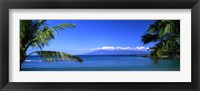 Framed Palm trees on the beach, Kapalua Beach, Molokai, Maui, Hawaii, USA
