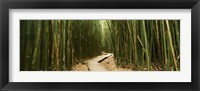 Framed Wooden path surrounded by bamboo, Oheo Gulch, Seven Sacred Pools, Hana, Maui, Hawaii, USA