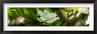 Framed Fern with magnolia