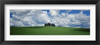 Framed Trees on the top of a hill, Palouse, Whitman County, Washington State, USA