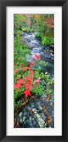 Framed River flowing through a forest, Black River, Upper Peninsula, Michigan (vertical)