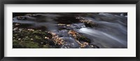 Framed Close-up of Dart River and fallen leaves, Dartmoor, Devon, England