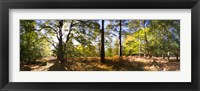 Framed Trees in autumn at sunset, New Forest, Hampshire, England