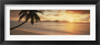 Framed Silhouette of a palm tree on the beach at sunset, La Digue Island, Praslin Island, Seychelles