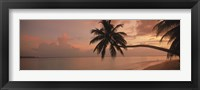 Framed Silhouette of palm trees on the beach at sunrise, Fihalhohi Island, Maldives