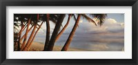 Framed Palm trees on the beach at sunset, Rarotonga, Cook Islands