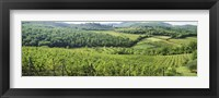 Framed Vineyards in Chianti Region, Tuscany, Italy