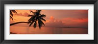 Framed Silhouette of palm tree on the beach at sunrise, Fihalhohi Island, Maldives