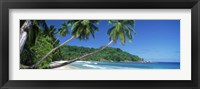 Framed Palm trees on the beach, Anse Severe, La Digue Island, Seychelles