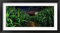 Framed Dark corn field