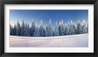 Framed Snow covered trees on a landscape, Belchen Mountain, Black Forest, Baden-Wurttemberg, Germany