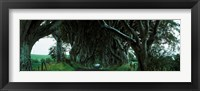 Framed Trees at the Dark Hedges, Armoy, County Antrim, Northern Ireland