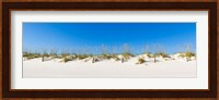 Framed Sand dunes on Gulf Of Mexico, Orange Beach, Baldwin County, Alabama, USA