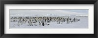 Framed Emperor penguins (Aptenodytes forsteri) colony at snow covered landscape, Snow Hill Island, Antarctica