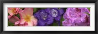 Framed Close-up of pink and purple  flowers