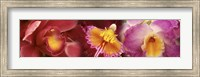 Framed Details of red and violet Orchid flowers