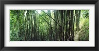 Framed Bamboo forest, Chiang Mai, Thailand