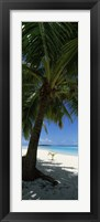 Framed Palm tree on the beach, Aitutaki, Cook Islands
