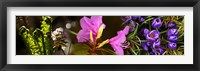 Framed Close-up of purple and pink flowers