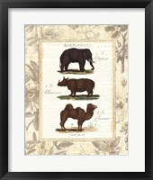 African Animals II Framed Print