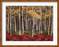 Framed Aspen Forest