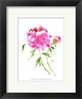 Framed Peonies in Pink I