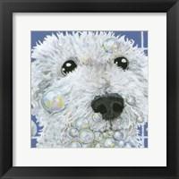 Framed Bubbles - Stella
