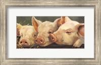 Framed Pig Heaven