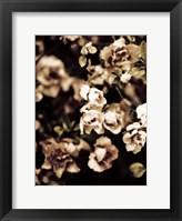 Framed Romantic Roses I