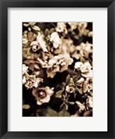 Framed Romantic Roses II