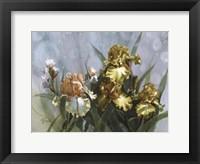 Framed Hadfield Irises I