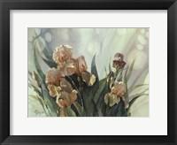 Framed Hadfield Irises II