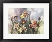 Framed Hadfield Irises V