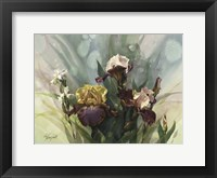 Framed Hadfield Irises VI