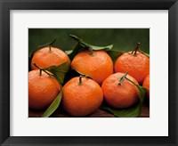Framed Satsuma Tangerines I