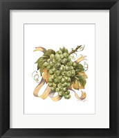 Framed Watercolor Grapes II