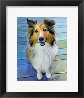 Framed Sheltie the Eyes Have it