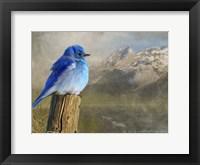 Framed Mountain Blue Bird