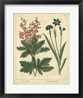 Framed Garden Flora VII