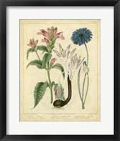 Framed Garden Flora VIII