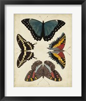 Display of Butterflies I Framed Print