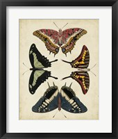 Display of Butterflies II Framed Print
