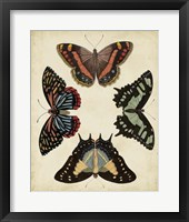Display of Butterflies IV Framed Print