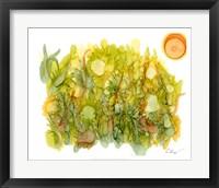 Framed Sunlit Poppies IV