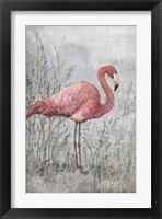 Framed American Flamingo I